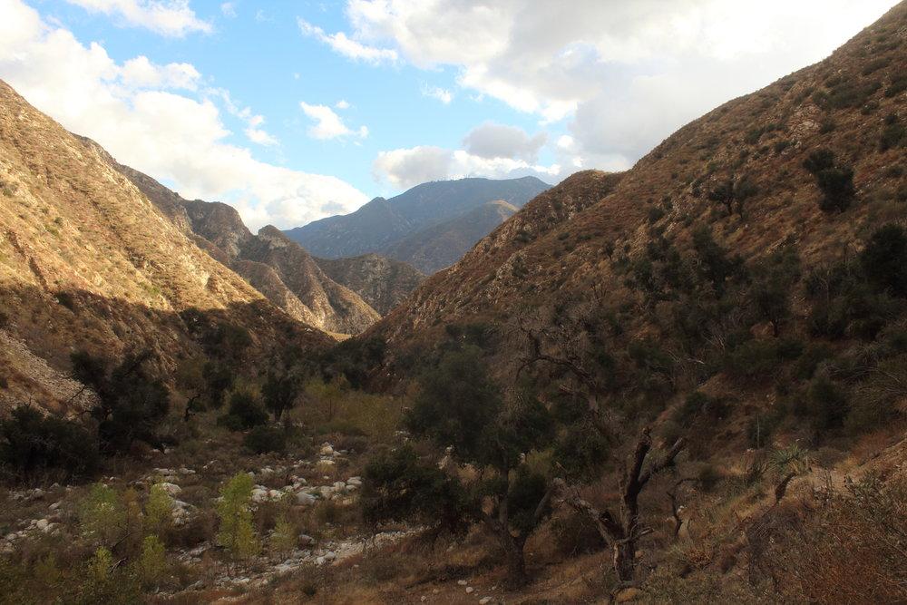 Trail Canyon Trail - San Gabriel Mountains