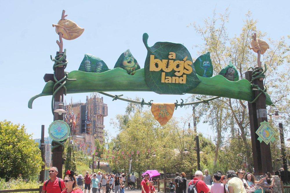 A bugs land.JPG