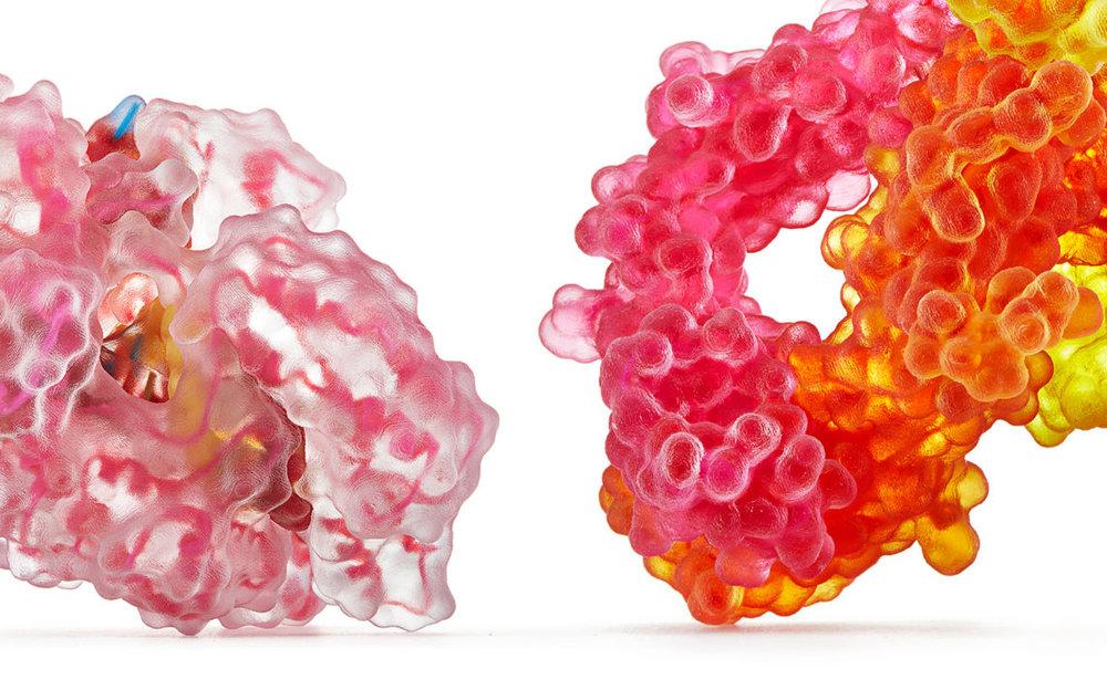 Biologic Models founder uses Stratasys J750 to produce multicolor protein models [Photo courtesy of Shapeways]