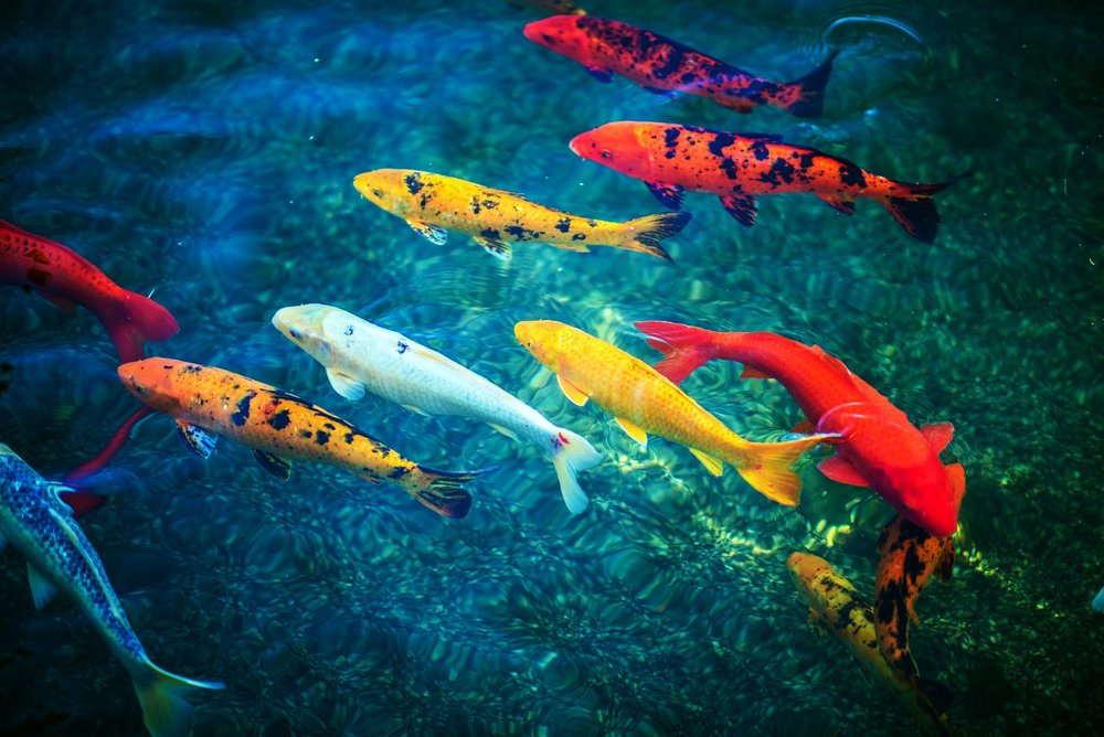 People have shorter attention spans than goldfish - Learn how to get them to dedicate their attention to your brand.