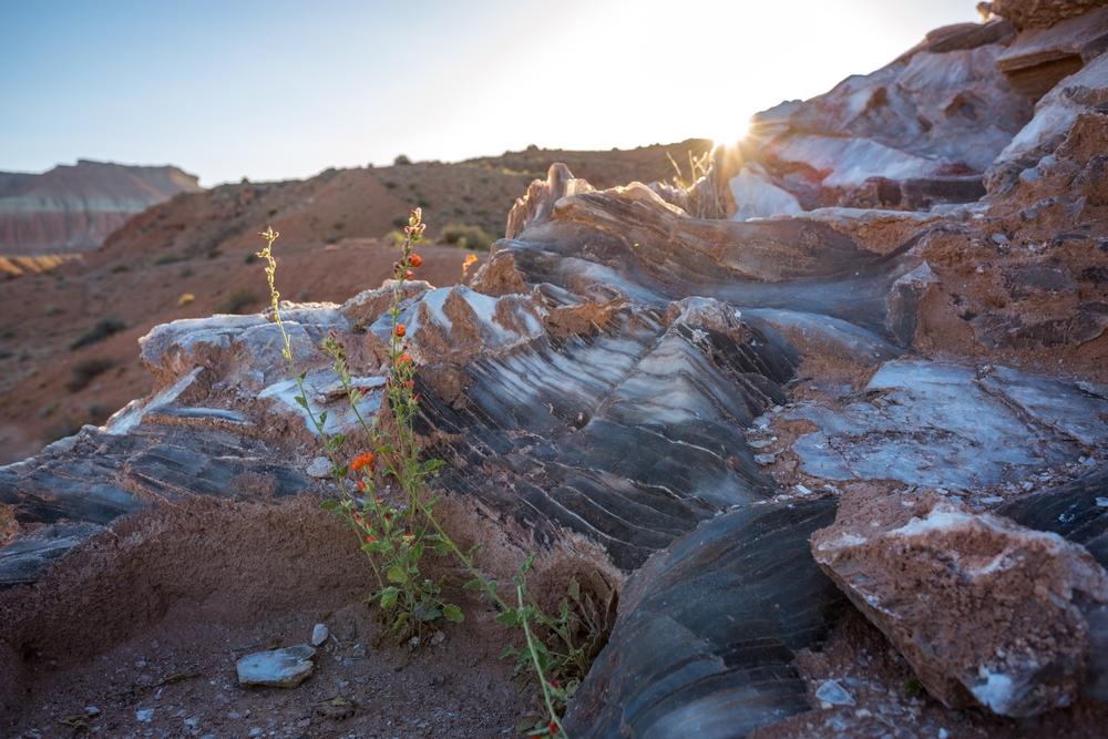 capital-reef-utah-desert-hiking-backpacking-camping (22).JPG