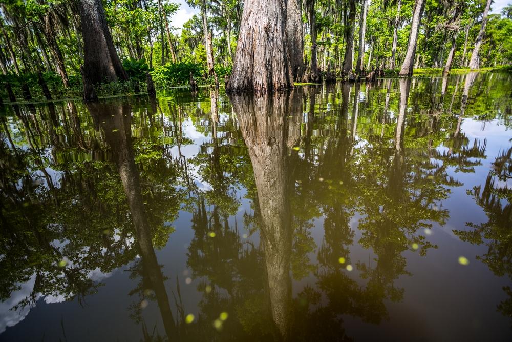 new-orleans-swamp-tour-paddle-kayak-outdoors (3).JPG