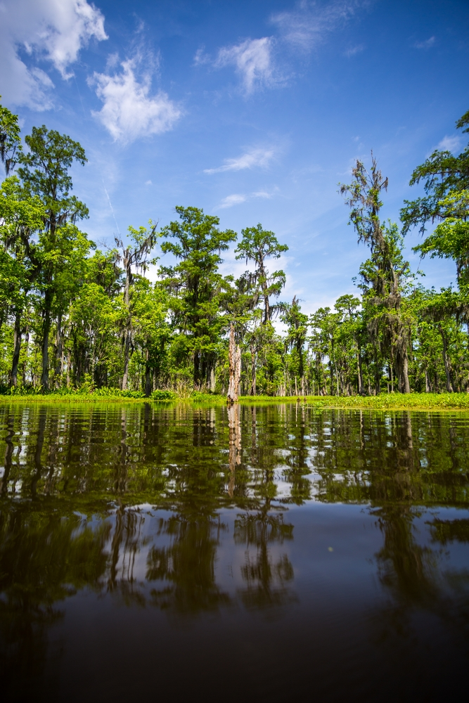 new-orleans-swamp-tour-paddle-kayak-outdoors (4).JPG