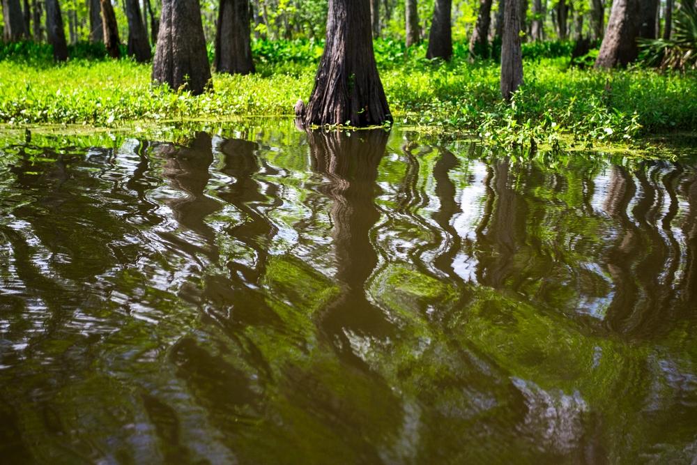 new-orleans-swamp-tour-paddle-kayak-outdoors (5).JPG