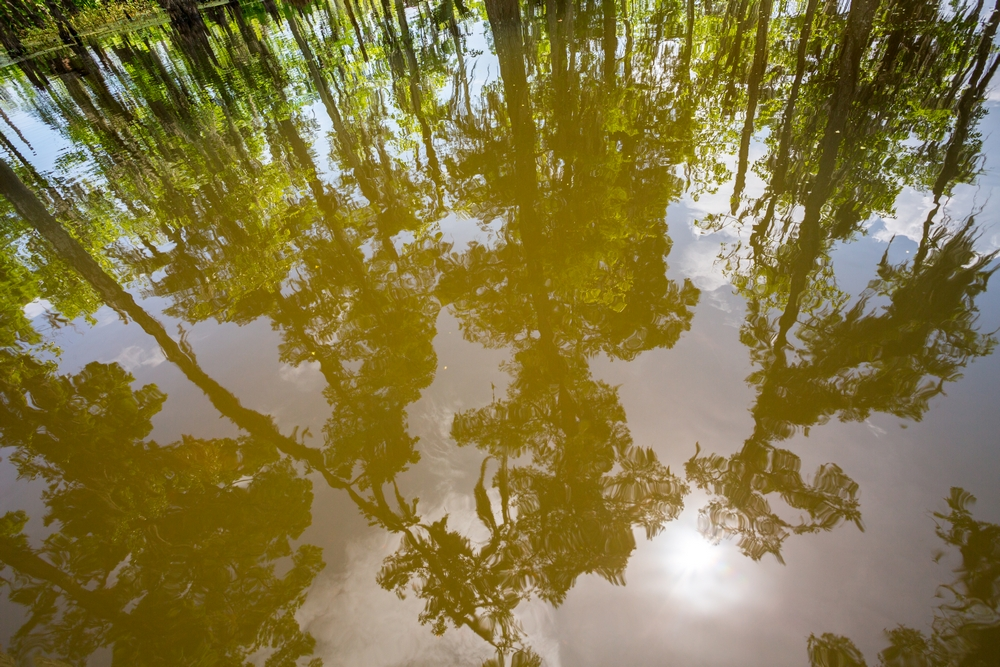 new-orleans-swamp-tour-paddle-kayak-outdoors (7).JPG