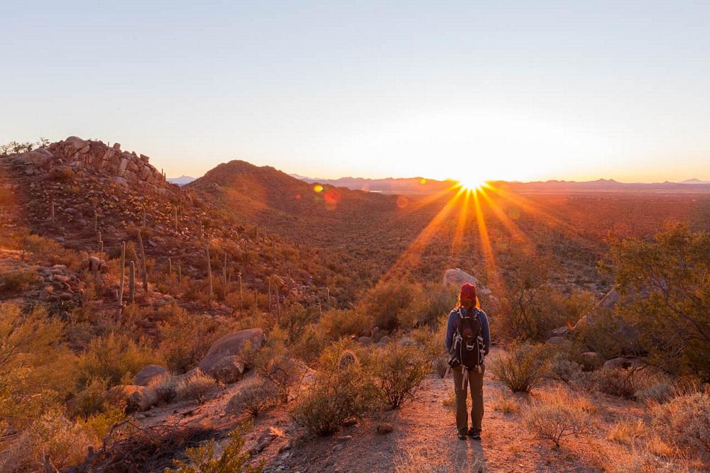 saguaro-desert-arizona-cactus-sunset.jpg