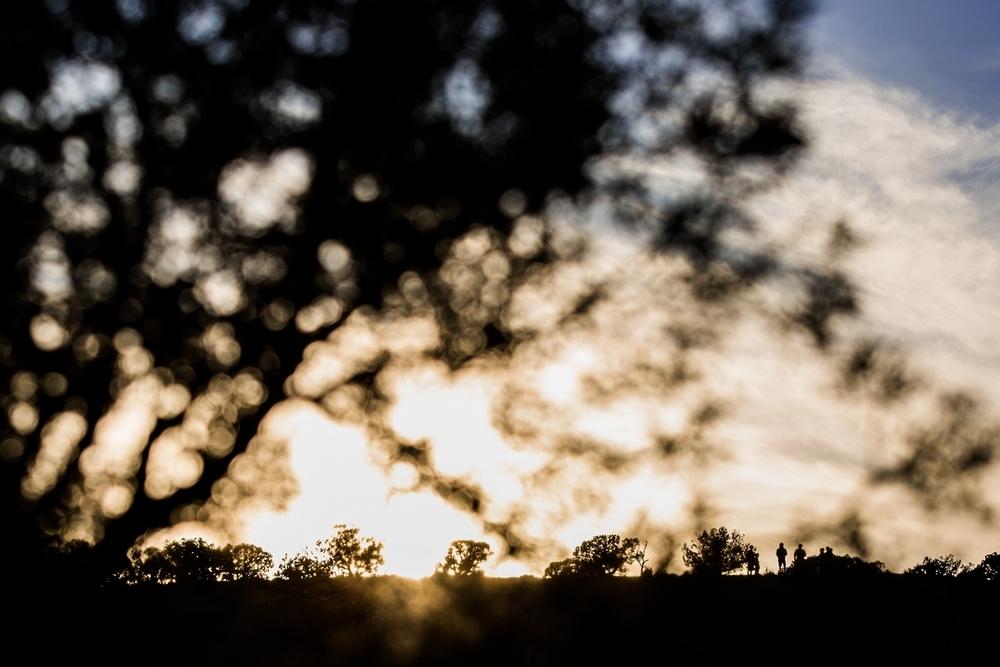 fruita-mountain-biking-sunset-tree-sillhouette.JPG