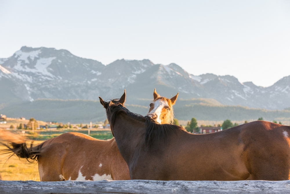 horses-stanley-idaho-evening.JPG