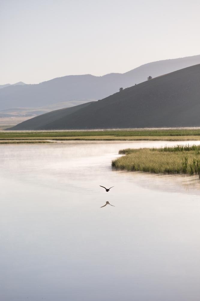 wyoming-grand-teton-national-park-bird-reflection.JPG