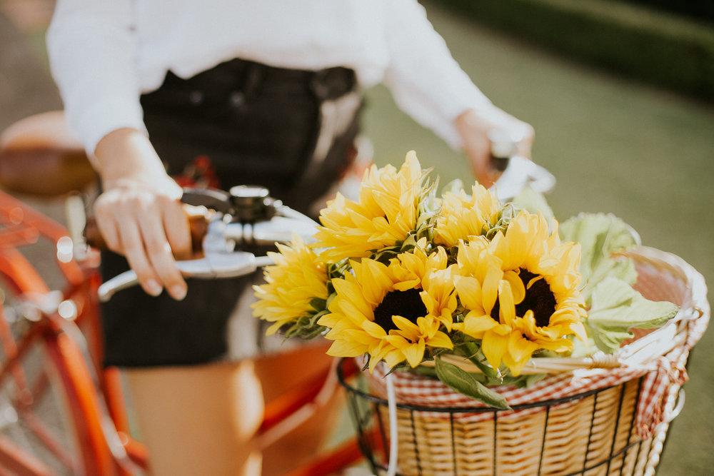 Sunflower Shoot-2.jpg