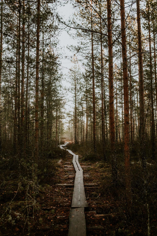 Pitkospuut-6.jpg
