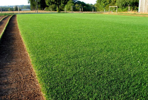 grass5.jpg