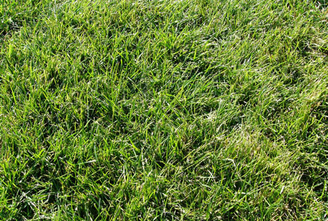 grass6.jpg