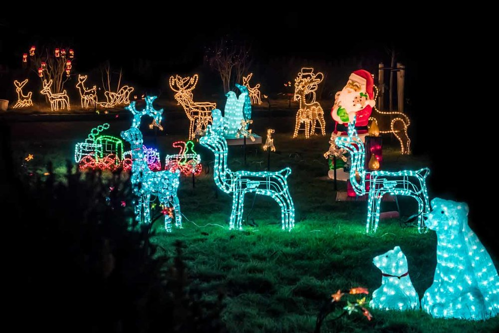 christmas-crewcut-garden.jpg