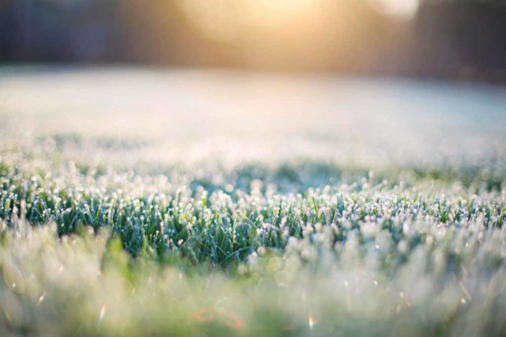 Frosted grass and dew