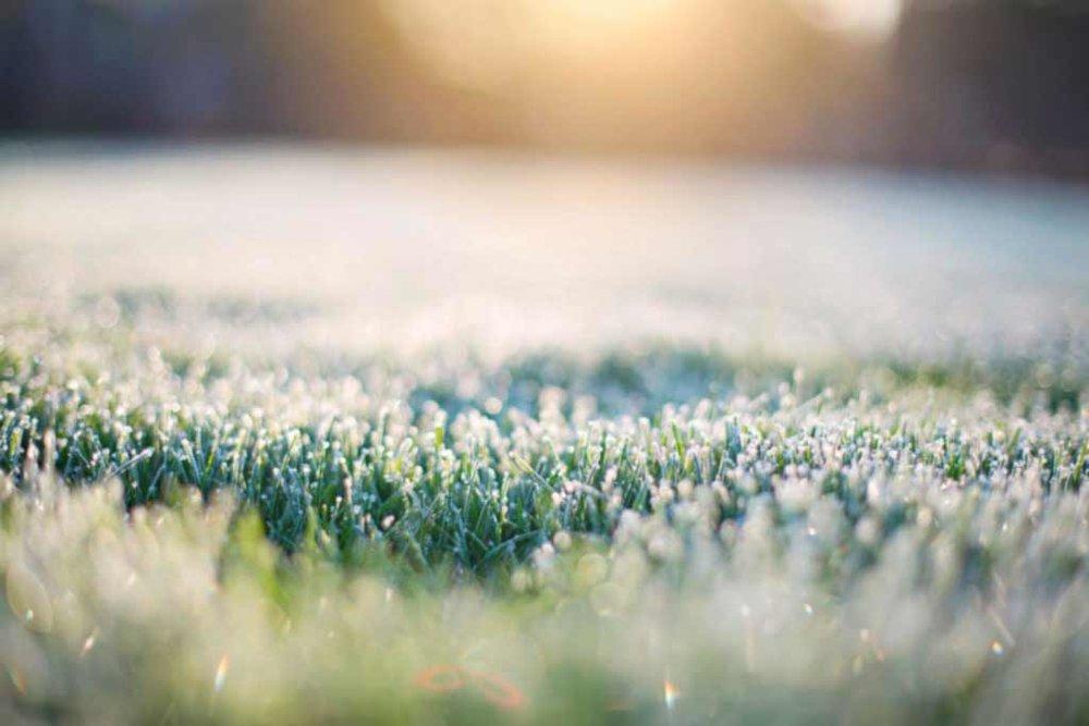 lawn-frost-winter.jpg