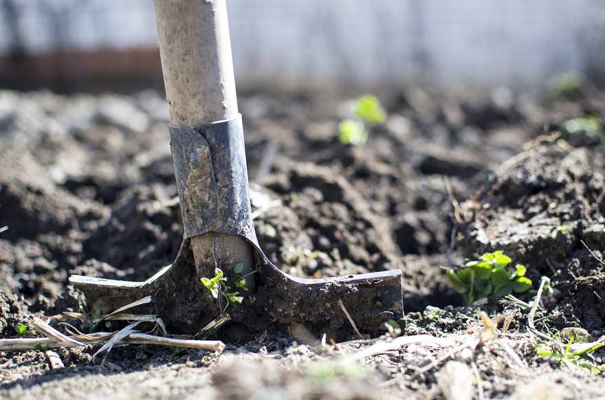 Garden shovel in the ground