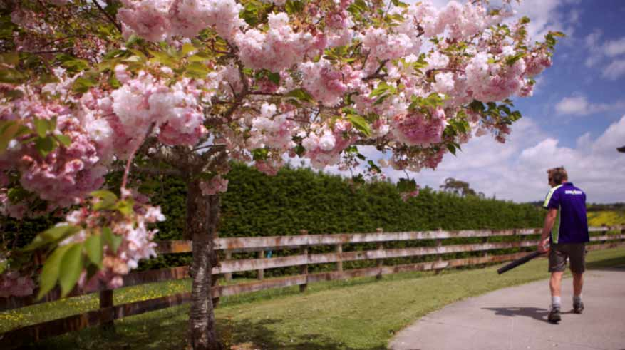 spring-lawn-business.jpg