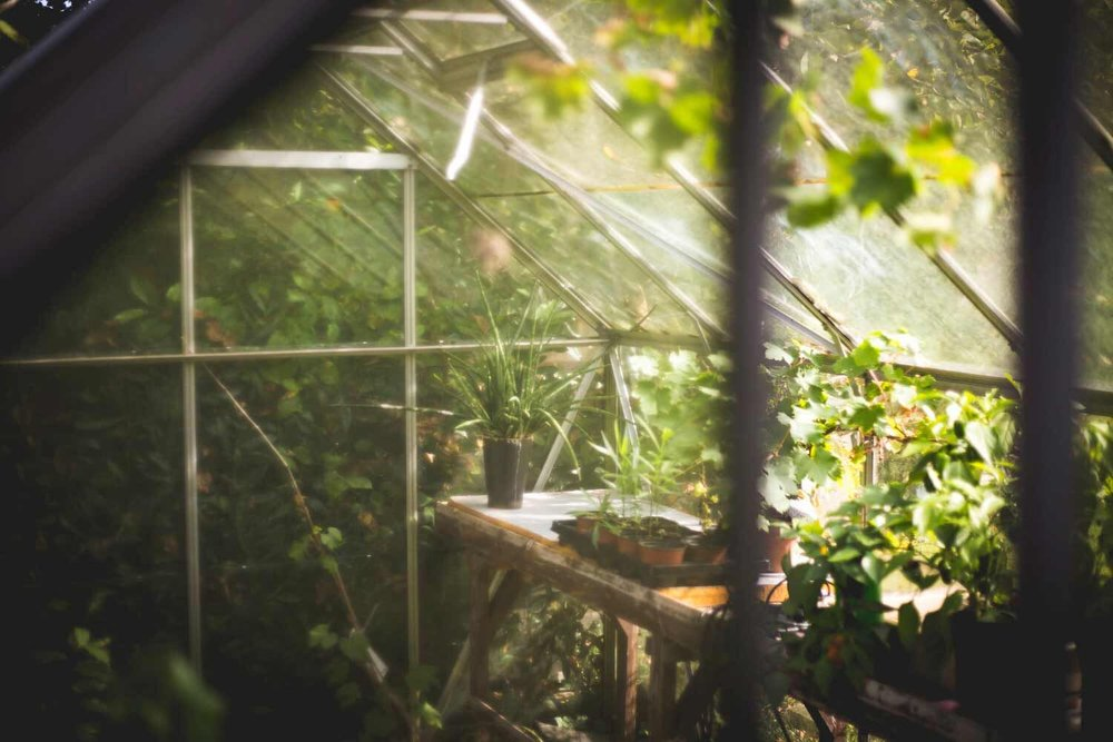 greenhouse-plants.jpg