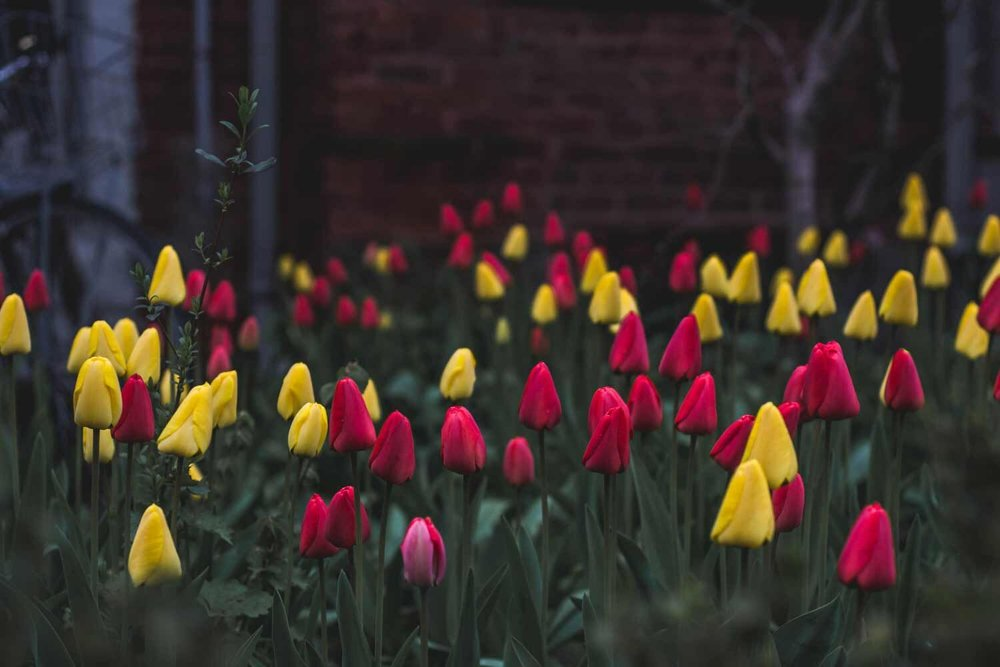 flowers-ready-to-bloom.jpg