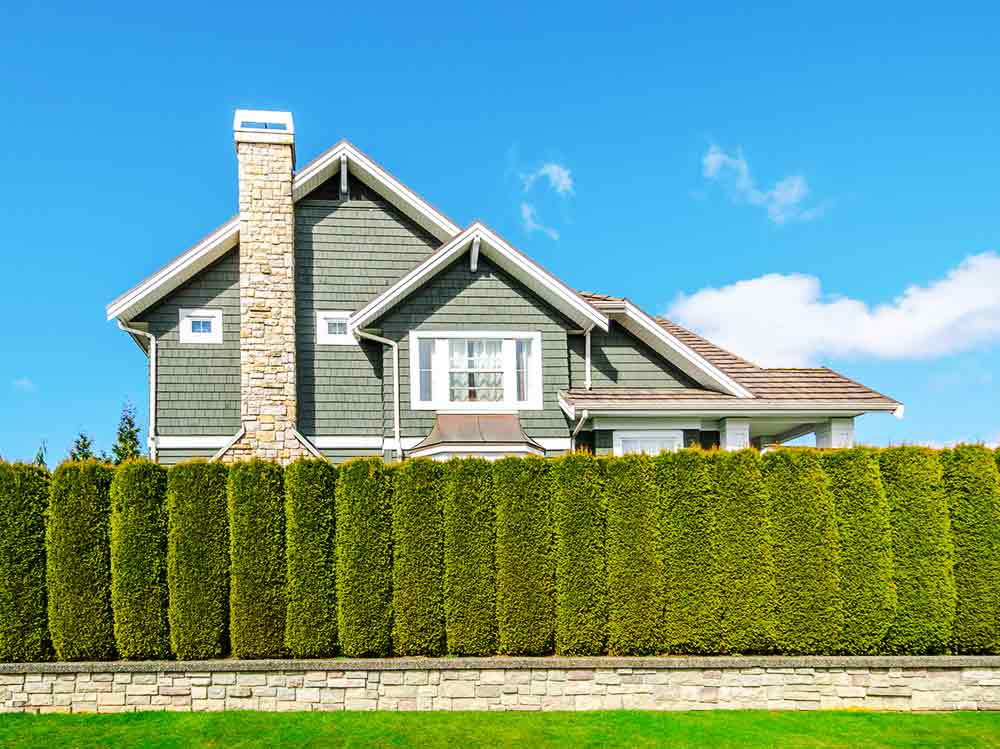 hedges-privacy-house.jpg