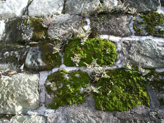 Shown here - liverwort with moss