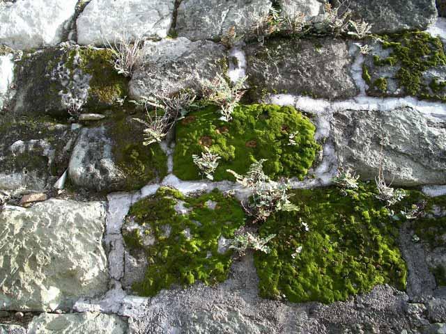 Liverwort with moss