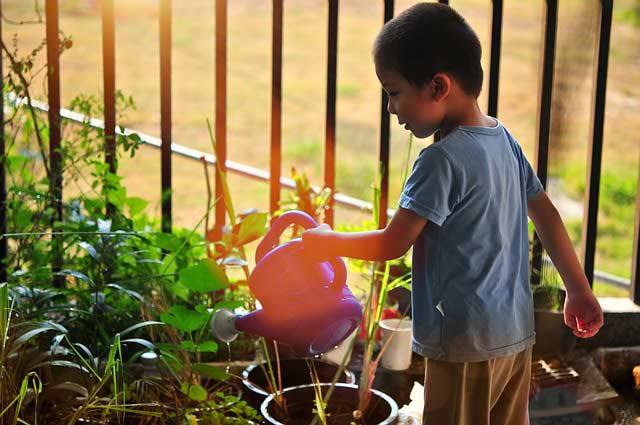 Small boy waters the pot plants