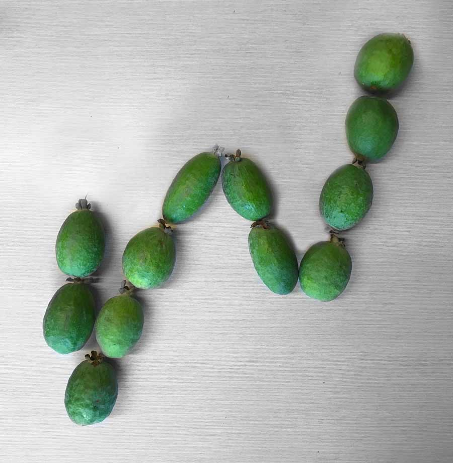 Feijoas in the formation of the Crewcut logo
