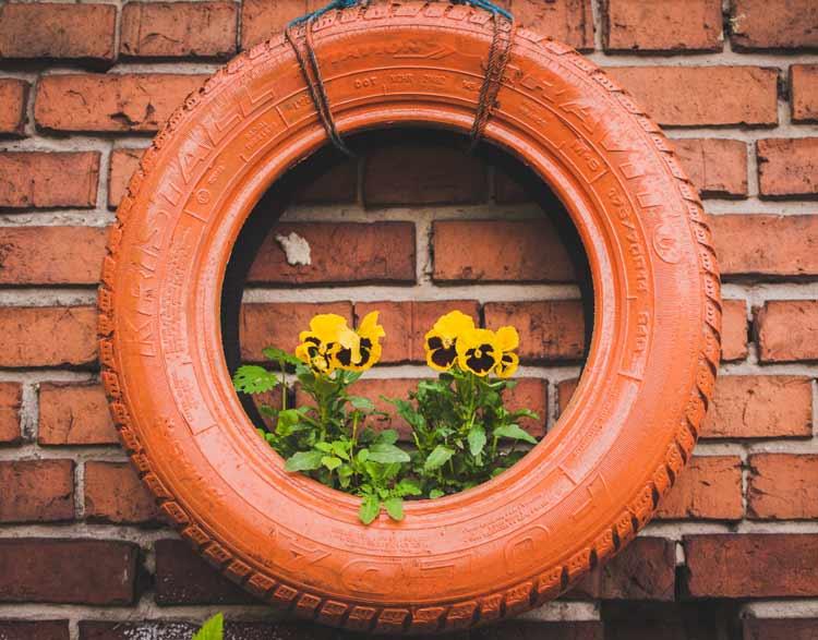 pansy-gardening.jpg