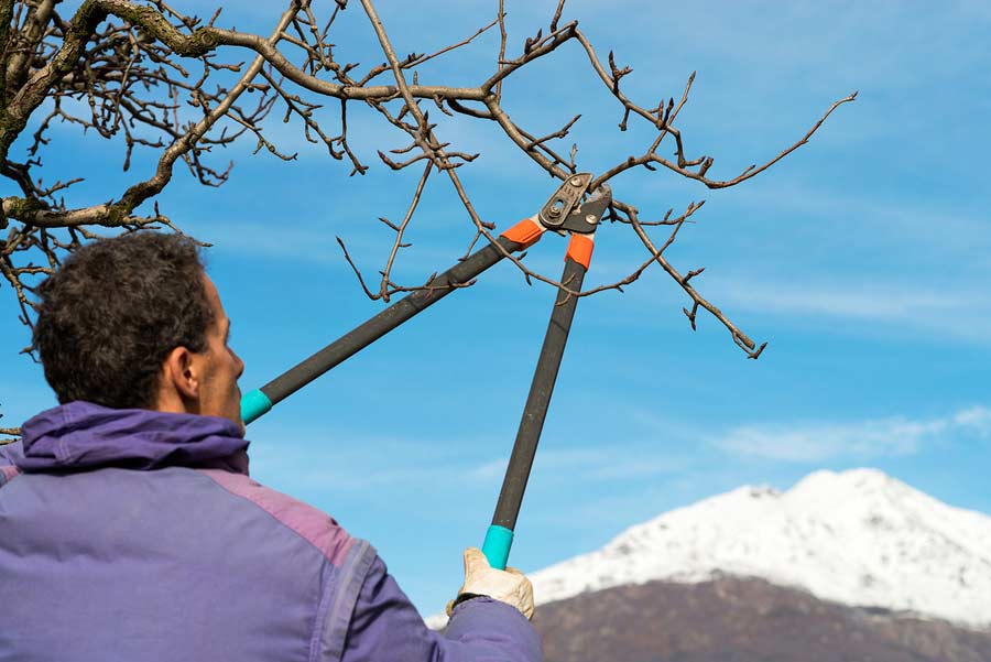 Man trimming a dead tree brach in winter