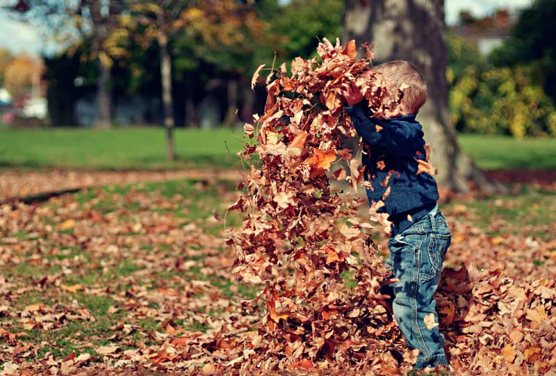 Small boy playing in Autumn leaves