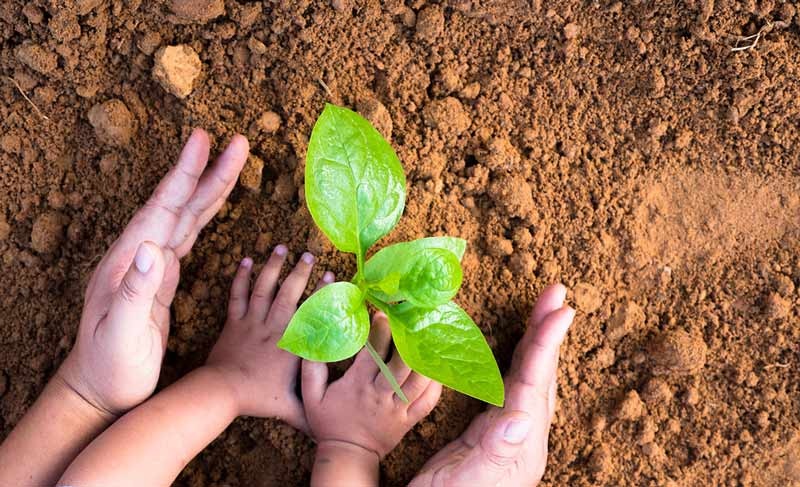 Small child and parent growing sapling from ground