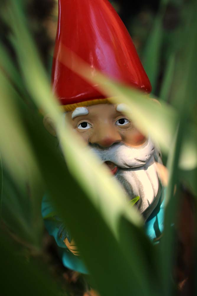 Garden gnome behind blurred blades of grass