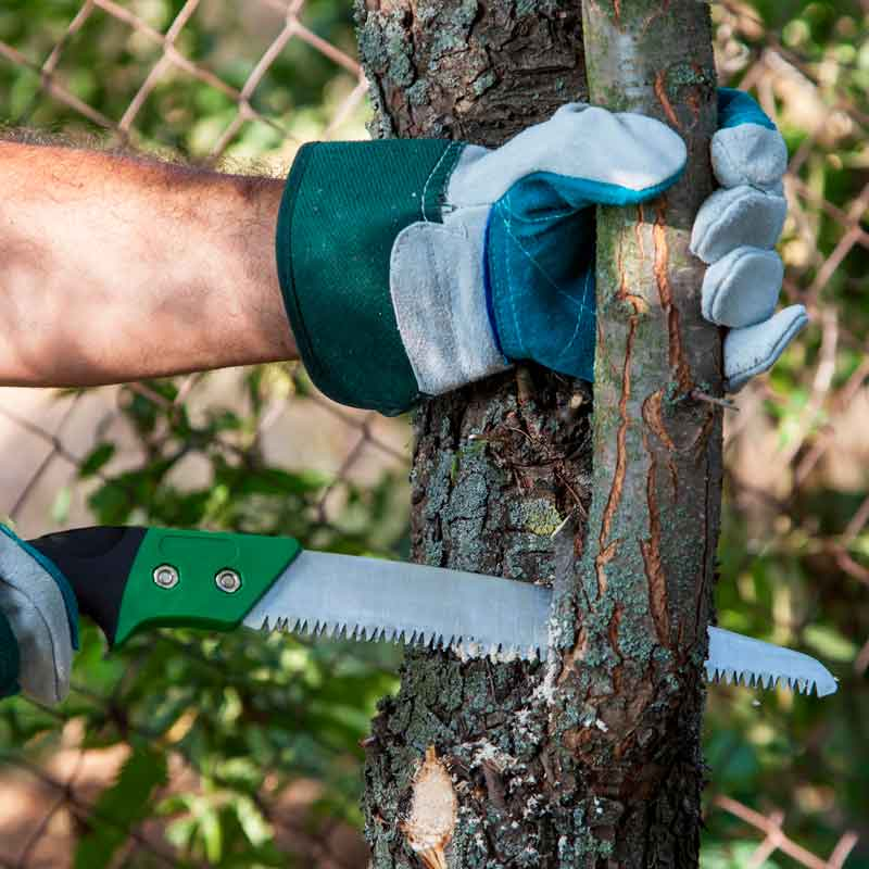 pruning-branches.jpg