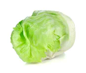 lettuce.jpg