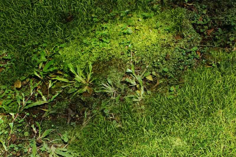 Moss.jpg