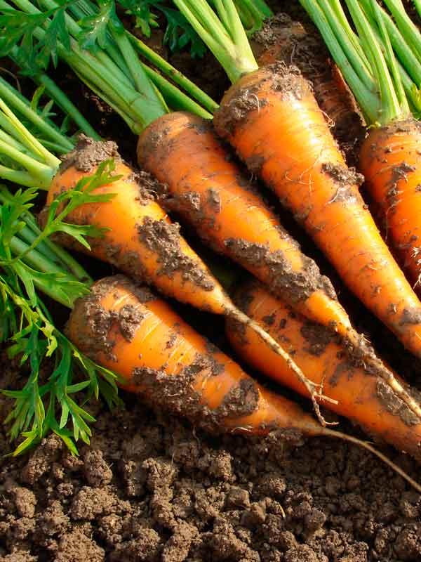 Soil-for-vegetables.jpg