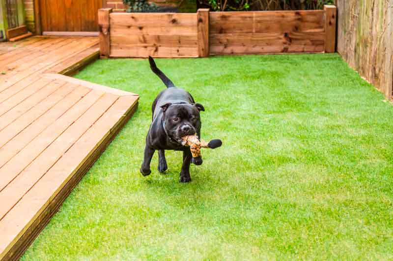 Artificial grass can grow on you.