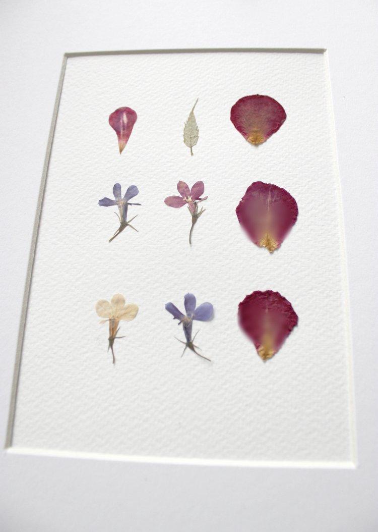 Vintage Pressed Flowers Flower Press Studios