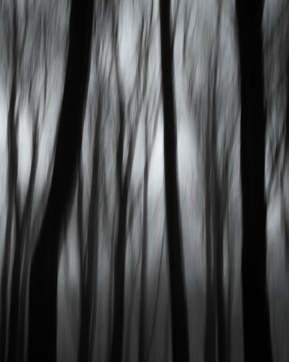 sankt olof tree coliur fog 5.jpg