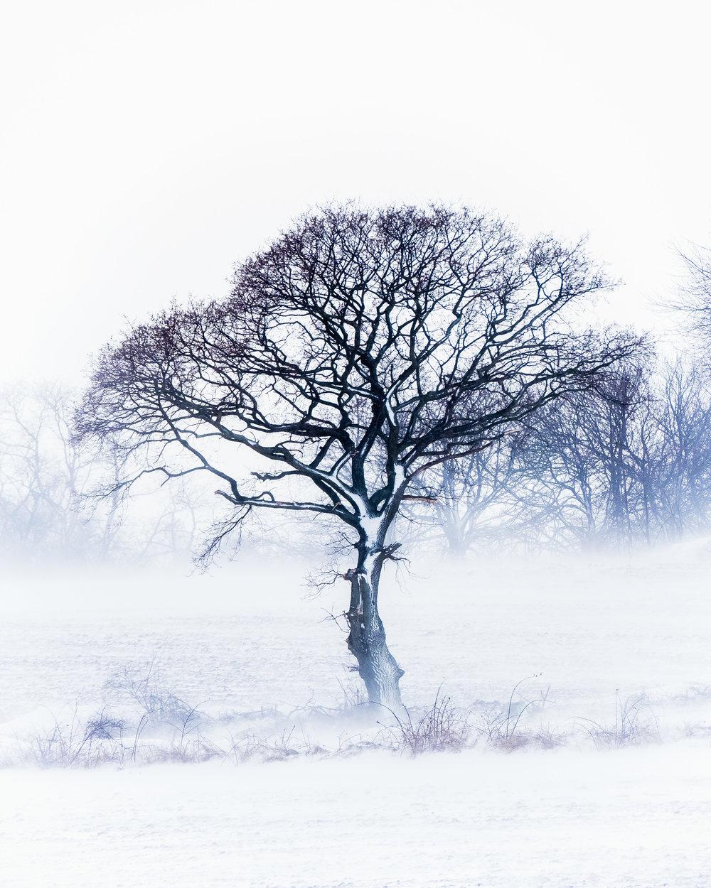 baskemolla tree field snow storm.jpg