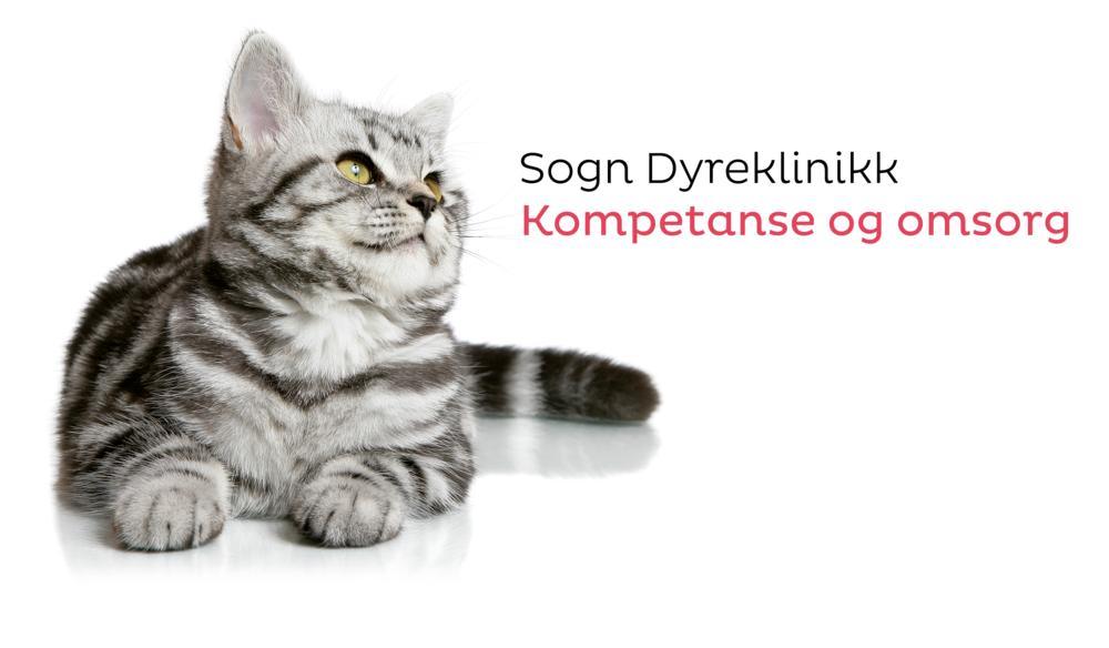 Katt og slagord.png