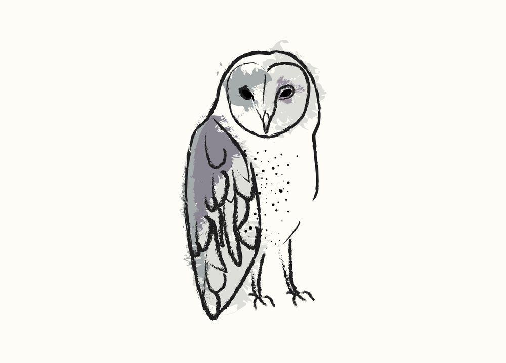 Owl  digital illustration