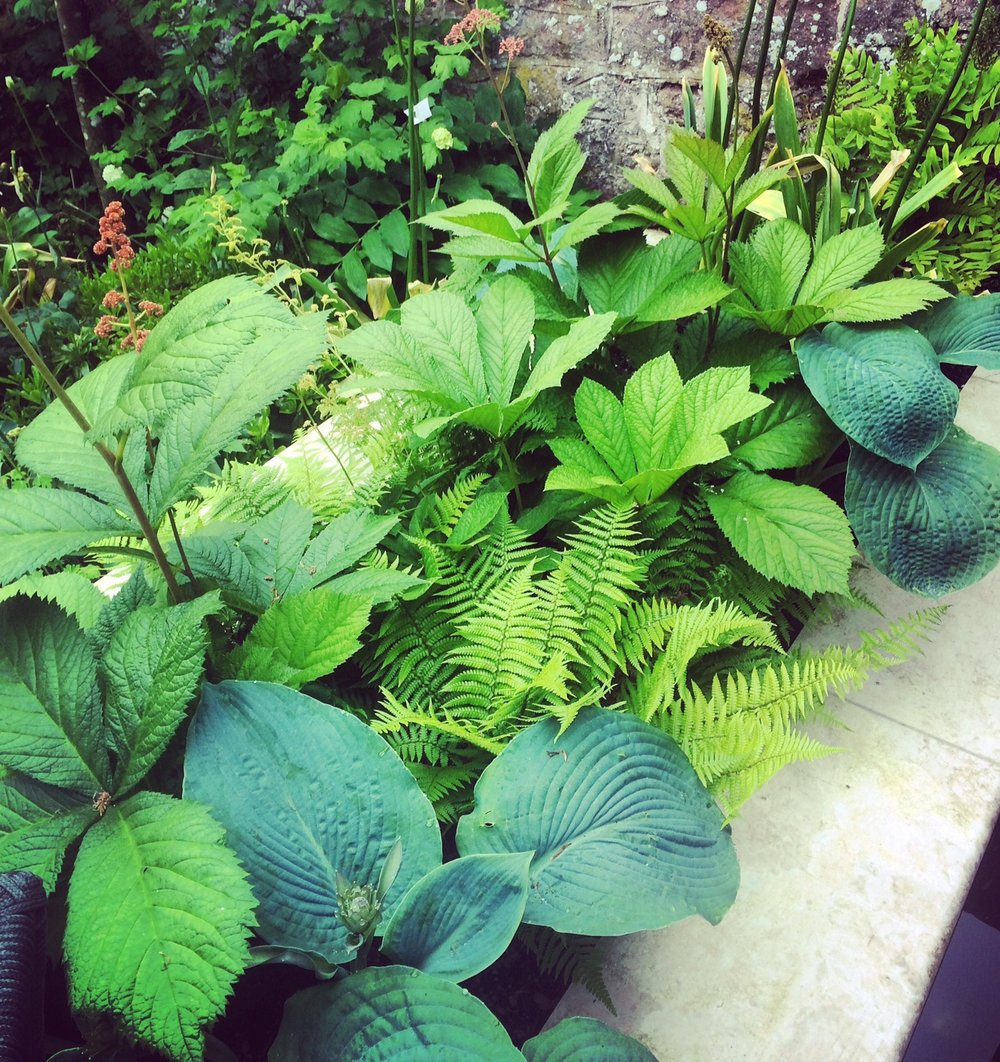Thoughtful Garden Design & Maintenance - Lucy Foat is a trained Horticulturalist & Garden Designer based in Bristol.She has been creating & maintaining beautiful gardens throughout London & the South West since 2010