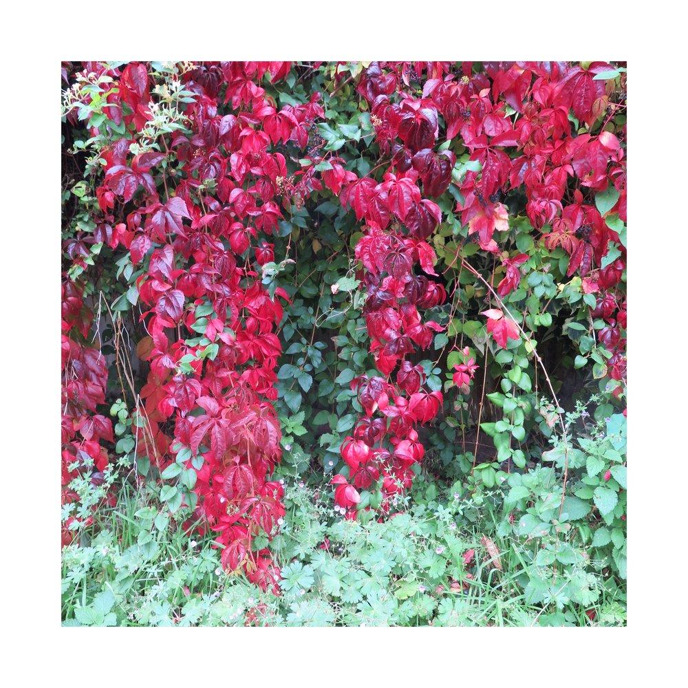 Beautiful foliage. Snore.