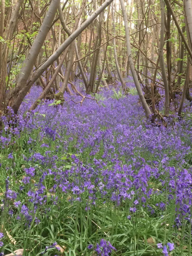 Spring Plant ID -