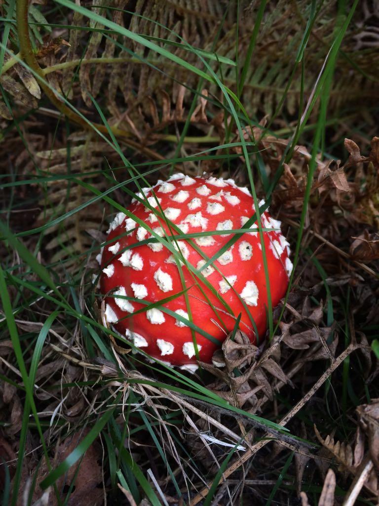 Autumn Fungi Foray -