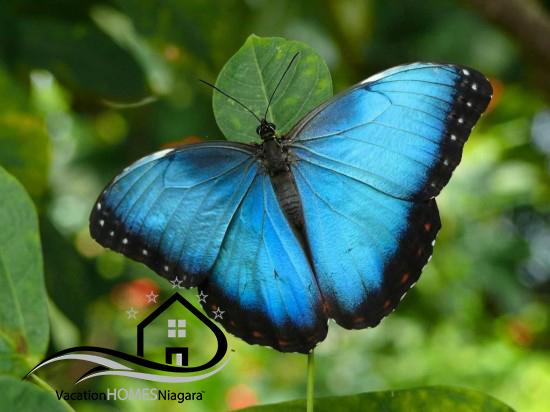 Niagara_Parks_Butterfly_Conservatory.jpg