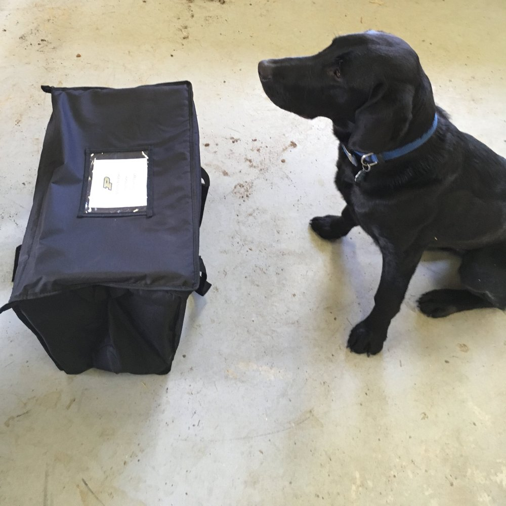 Insulated CSA Delivery bags and Rathgebers' Garten Team Member Baloo for scale